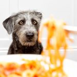 Begging for Food