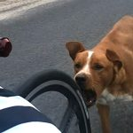 Chasing Bikes