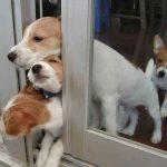 Crowding the Doorway